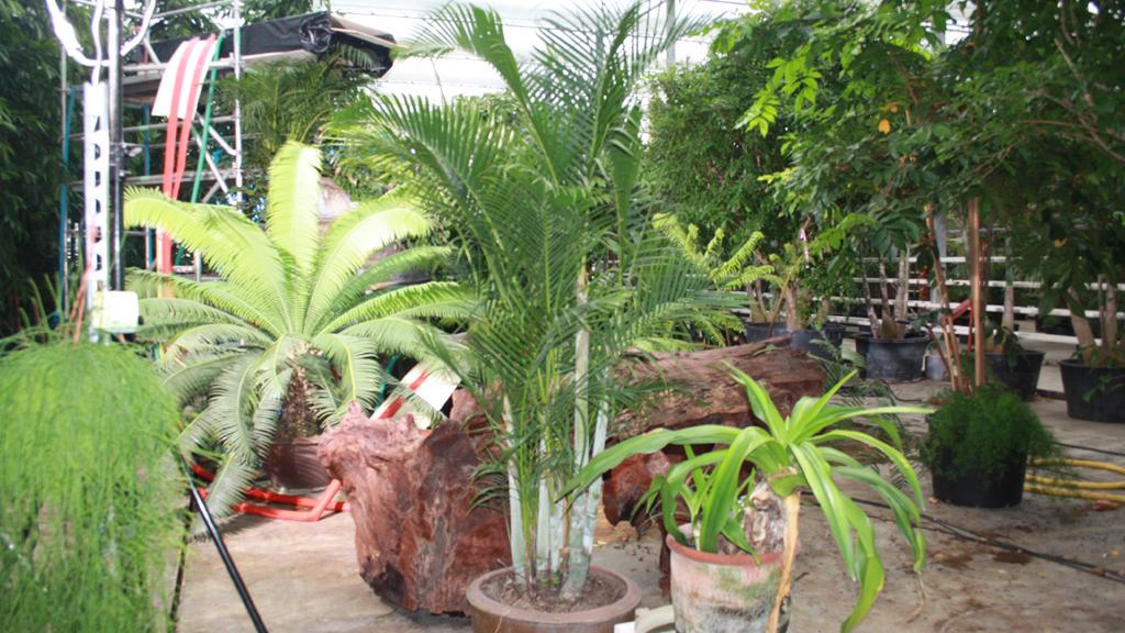C Alpro Jungle9