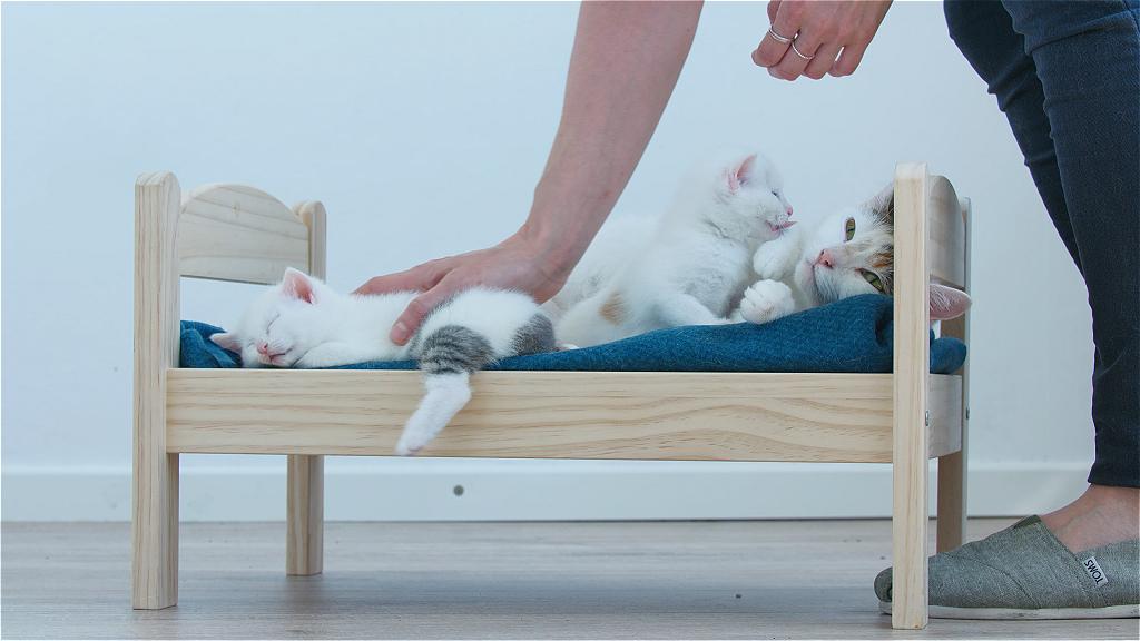 DB Kittens setpicts 01